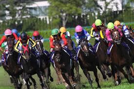 競馬は人と馬の愛情