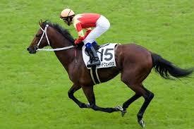 騎手と馬の信頼関係